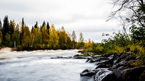 Explore the Wilderness - Photography expedition (Summer & Autumn), Rovaniemi, Day Trips