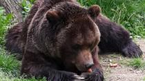 Day tour from Brasov to the Bears Sanctuary, Rasnov Fortress and Bran Castle, Brasov, Attraction...