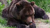Day tour from Brasov to the Bears Sanctuary, Rasnov Fortress and Bran Castle, Brasov, Day Trips