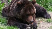 Private 3-Day Best of Romania Tour from Bucharest: Peles Castle, Bran Castle, Bears Sanctuary, ...