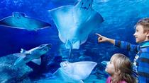 Keine-Warteschlange-Ticket für AquaDom und SEA LIFE Berlin, Berlin, Attraction Tickets