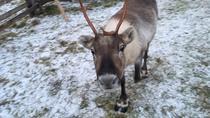 5-hour sightseeing in Helsinki and Nuuksio Reindeer Park, Helsinki, Cultural Tours