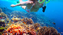 St Kitts Shore Excursion: Private Snorkeling Tour, St Kitts, Ports of Call Tours