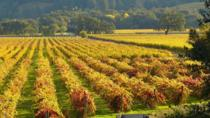Calistoga Wine Tasting Bike Tour, Healdsburg, Wine Tasting & Winery Tours