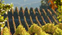 Electric Bike Tour in Sonoma and Napa Wine Country, Healdsburg, Wine Tasting & Winery Tours