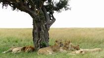 6 Days Kenya Classic Safari, Nairobi, Cultural Tours
