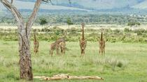 7 Days - Kenya Explorer Safari, Nairobi, Cultural Tours