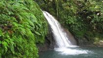 Sightseeing Tour: Coffee and Cocoa, Guadeloupe, Coffee & Tea Tours