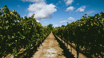 Santa Barbara Wine Country Tour, Santa Barbara, Wine Tasting & Winery Tours