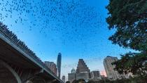 Congress Avenue Bat Bridge Kayak Tour in Austin, Austin, City Tours