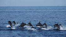 Bohol Pamilacan Island Dolphin Whale Watching Tour, Bohol, Dolphin & Whale Watching