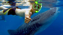 Budgeted from Bohol to Oslob Cebu Whale Shark Experience, Cebu, Other Water Sports