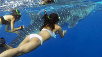 From Bohol to Oslob Cebu Whale Shark Experience, Bohol, Other Water Sports
