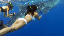 Oslob Cebu Whale Shark Experience, Cebu, Other Water Sports