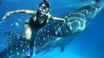 Private Oslob Cebu Whale Shark Experience, Cebu, Other Water Sports