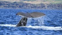 Whale Watching Tour in the Azores, Azores, Dolphin & Whale Watching