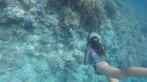 Half-Day Discovery Freediving in Moalboal, Cebu, Other Water Sports