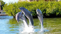 Dolphin Research Center and Florida Keys Tour, Key West