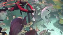 Full-Day Tour to Florida Keys Aquarium Encounters from Key West, Key West, Full-day Tours