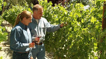 Private Pahrump Winery Tour from Las Vegas, Las Vegas, Wine Tasting & Winery Tours