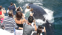 Sea World Whale Watch Cruise on the Gold Coast, Gold Coast, Dolphin & Whale Watching