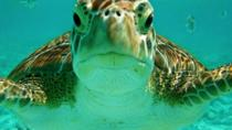 Half Day Akumal Bay Sea Turtle Snorkeling and Cenote from Riviera Maya, Cancun and Tulum, Tulum, ...
