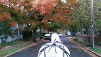Fredericksburg After Hour Private Horse and Carriage Ride, リッチモンド