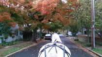 Fredericksburg Daytime Private Carriage Ride, Richmond, Horse Carriage Rides