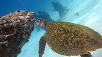 Diving Tour for Certified Divers from Koh Samuni, Koh Samui, Scuba Diving