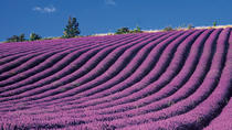 Provence and Lavander - Shared and Guided Full Day Tour, Nice, Day Trips