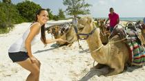 Camel Ride Tour from Cancun and Riviera Maya, Cancun, Nature & Wildlife