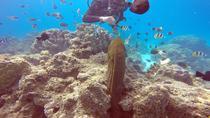 SCUBA DIVING PRIVATE INTRO OR CERTIFIED DIVE 1 TANK, Bora Bora, Scuba Diving