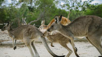 Australien Eintrittskarte für den Walkabout Wildlife Park, New South Wales, Attraction Tickets