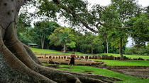 Full-Day Tour of the Taíno Route in Puerto Rico, San Juan, Archaeology Tours
