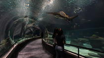 Early-Access Entrance Ticket to AquaRio Aquarium , Rio de Janeiro, Attraction Tickets