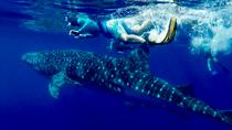 COMBO Ocean Adventure: Dolphins, Whales, Reef, Sea Caves and Lava Tubes, Big Island of Hawaii, 4WD, ...