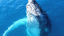 Whale Watch and Reef Snorkeling Excursion, Big Island of Hawaii, Dolphin & Whale Watching