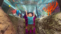 3-Attraction Ticket: Icon Orlando, Madame Tussauds Orlando and SEA LIFE Aquarium, Orlando, ...