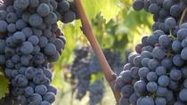 Chianti Organic Vineyards Grand Tour in Private Luxury Van from Florence-Tuscany, Florence, Bus &...