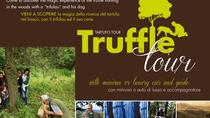 Truffles, Chianti Wine & Olive Oil Tour with stop in Pisa, Livorno, Private Sightseeing Tours
