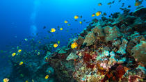 Scuba Dive: 2-Shallow Reef Dives from Waikiki, Oahu, Scuba Diving