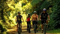 ウェリントンからのRemutaka Rail Trail Cycle Tour, Wellington, Bike & Mountain Bike Tours