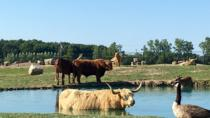 Admisión a African Safari Wildlife Park, Sandusky, Zoo Tickets & Passes