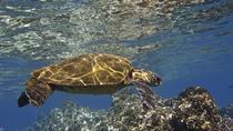Lahaina Paddle, Maui, Kayaking & Canoeing