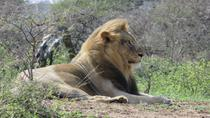 Full-Day Hluhluwe Imfolozi Park Big Five Game Drive, St Lucia, Safaris