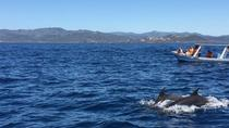 DOLPHINS WATCHING TOUR, Sámara, Day Cruises