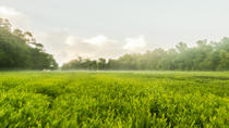 Charleston Tea Plantation & Winery and Distillery Tour with Transport, Charleston, Plantation Tours