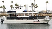 Two-Hour Whale Watching Tours from Oceanside, San Diego, Dolphin & Whale Watching