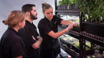 Introduction to Hydroponics & Indoor Farming Class, New York City, Craft Classes