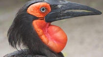 World of Birds Admission Ticket, Cape Town, Attraction Tickets